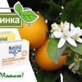 http://apraksin44.ru/wp-content/uploads/2015/09/1030.jpg