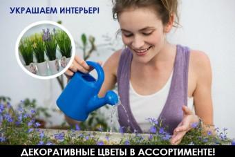 http://apraksin44.ru/wp-content/uploads/2015/09/1056.jpg